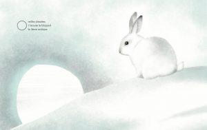 Banquise-pages-lièvre-arcti